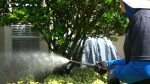 pressure washing bloomingdale